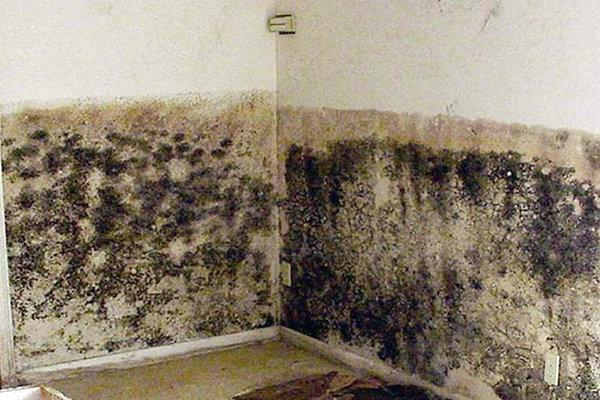 Плесень и грибок на стенах угловой квартиры